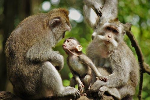 Ilmainen kuvapankkikuva tunnisteilla apina, apinan poikanen