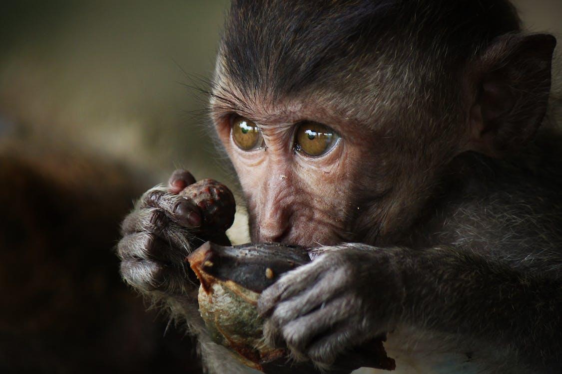 Close-up Photography of Monkey