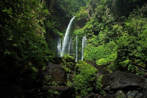 Ilmainen kuvapankkikuva tunnisteilla vesiputous, viidakko