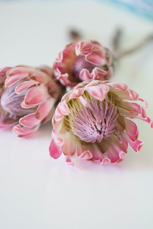 Kostnadsfri bild av blomma, blommor, blomning, delikat