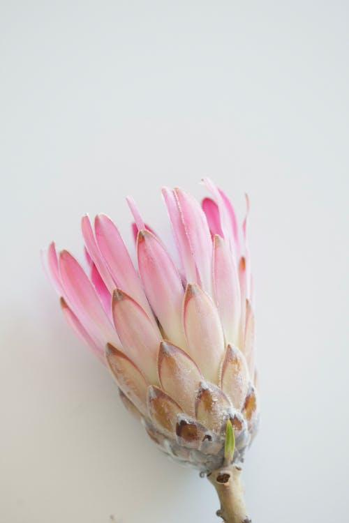 Kostnadsfri bild av blomma, blomning, delikat, exotisk