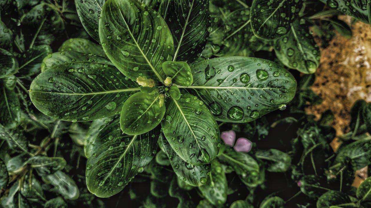 завод, краса в природі, листя