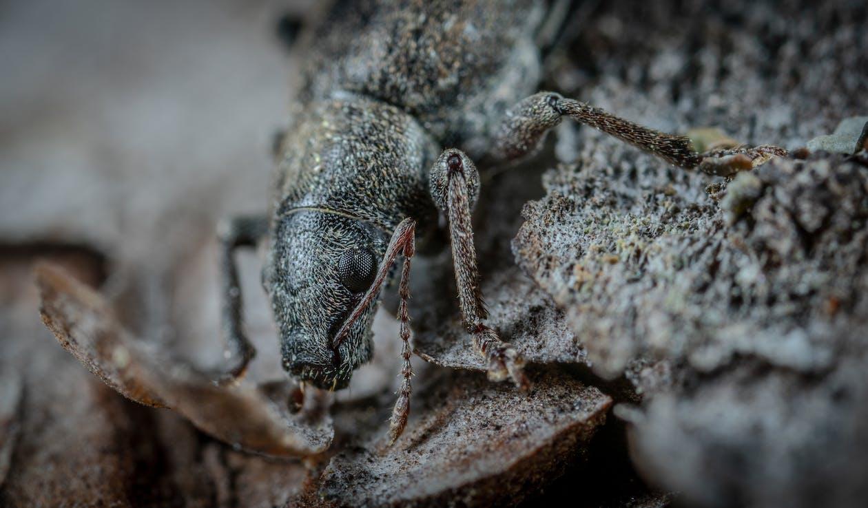 宏觀, 小, 小蟲