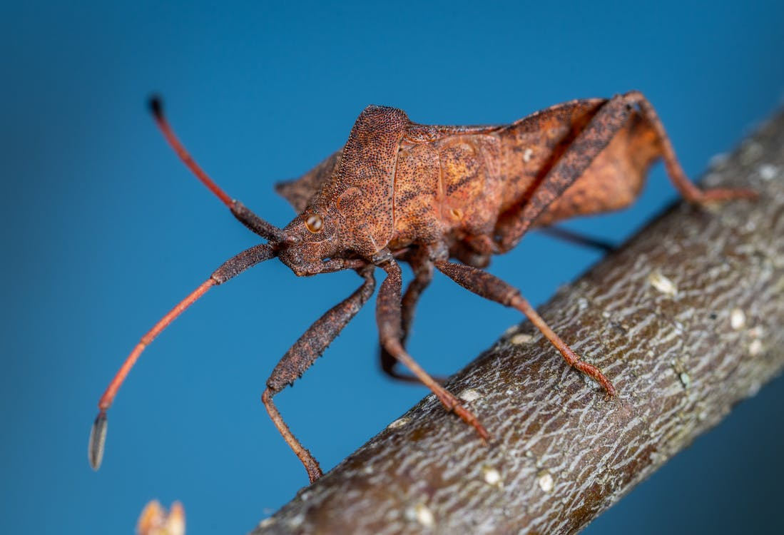 anténa, chrobák, detailný záber