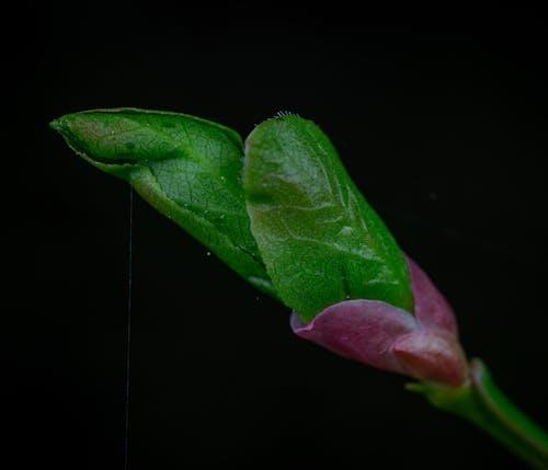 Kostnadsfri bild av grönt löv, makro