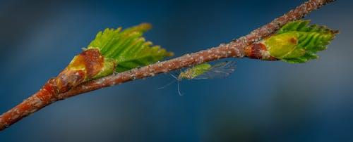 Kostnadsfri bild av insekt, makro, trädgren