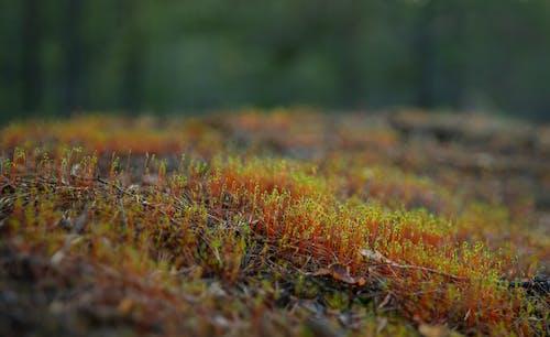Kostnadsfri bild av grönmos