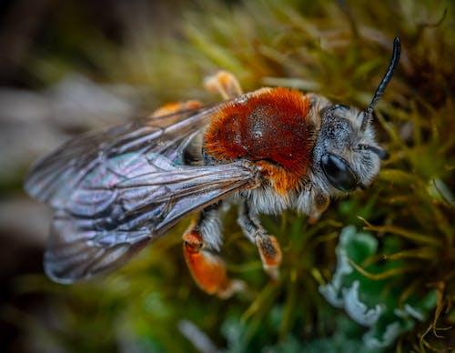 Kostnadsfri bild av bi, insekt, makro