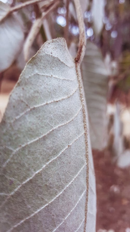 大葉子, 綠葉, 葉子 的 免费素材照片