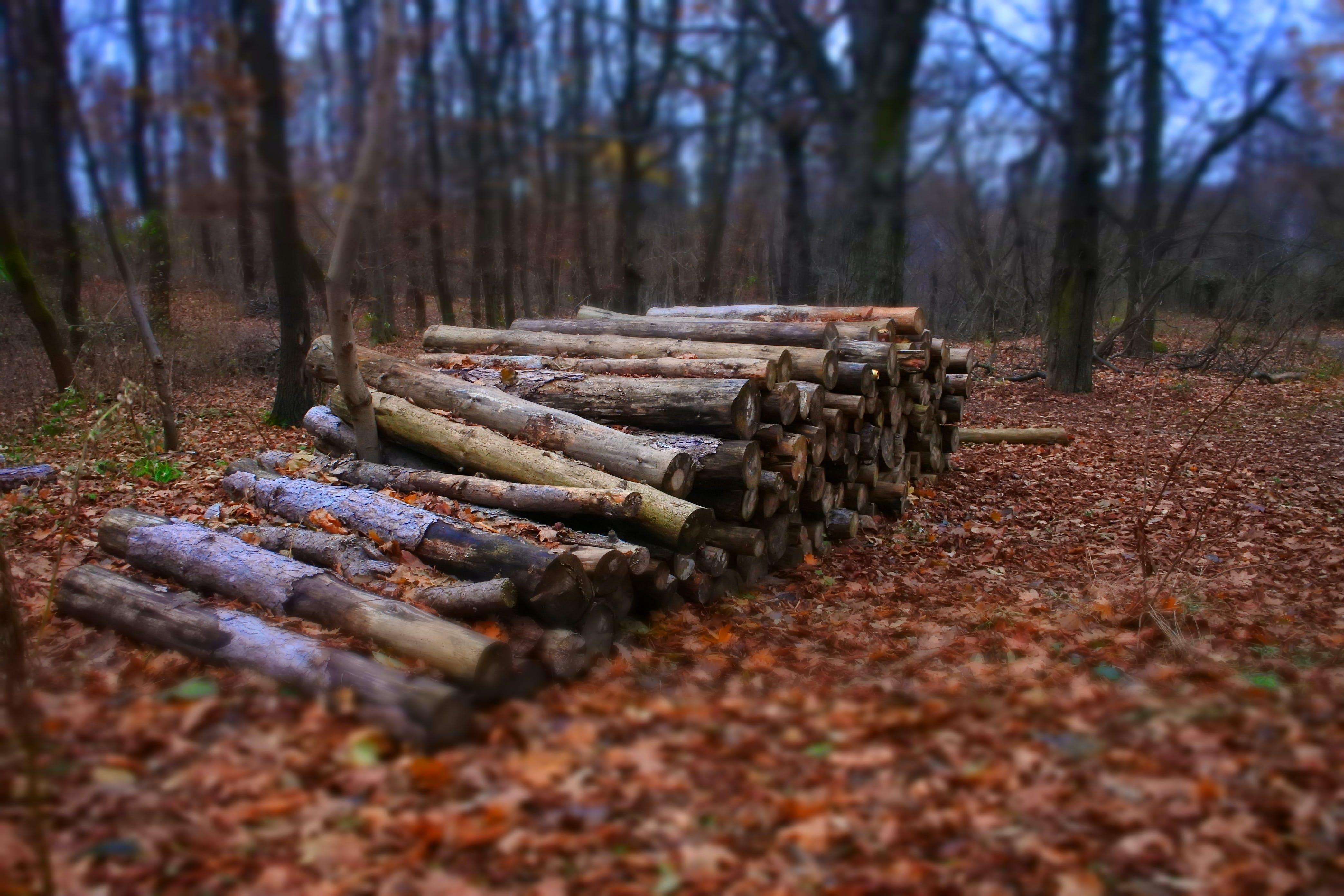 autumn, bark, blurr