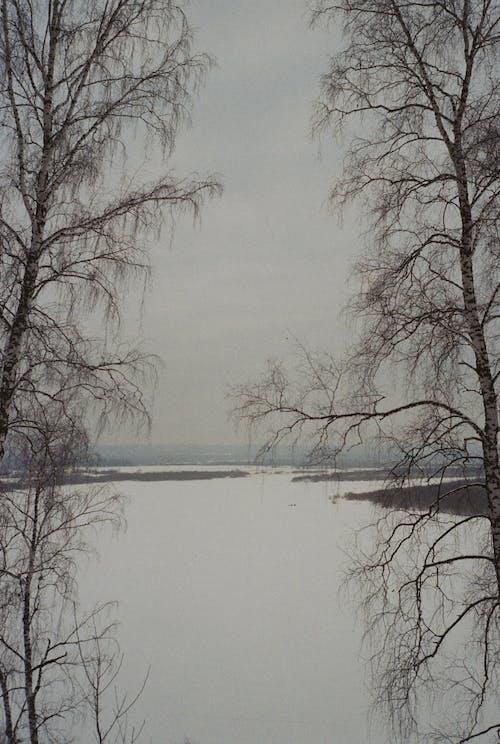 俄國, 冬季, 天性, 托木斯克 的 免費圖庫相片