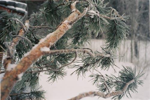 Gratis lagerfoto af bare træer, filmfotografering, natur, Rusland
