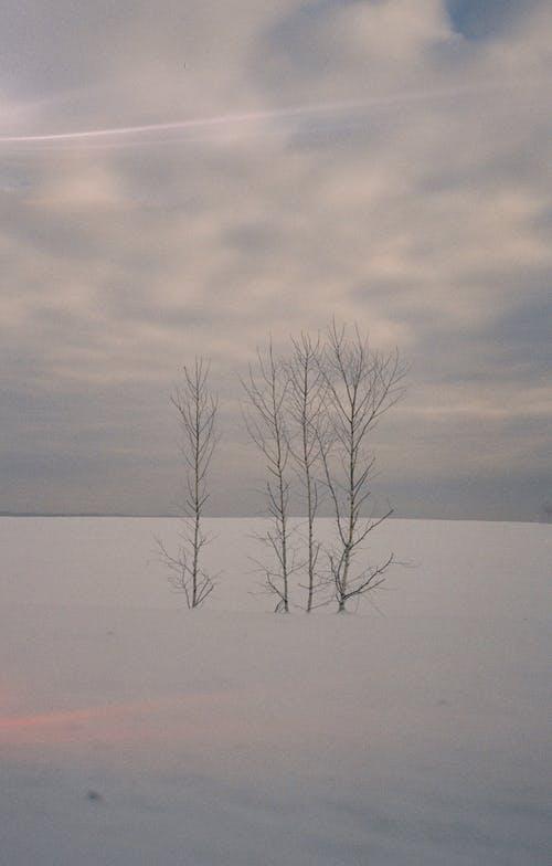 Gratis lagerfoto af bare træ, filmfotografering, forkølelse, Rusland