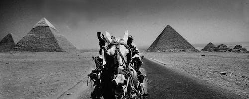 Ingyenes stockfotó johan bos piramisok lovas út szürkeárnyalatos témában