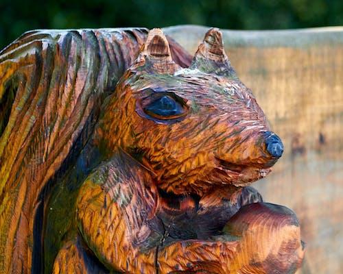 Foto d'estoc gratuïta de de fusta, esquirol, estàtua
