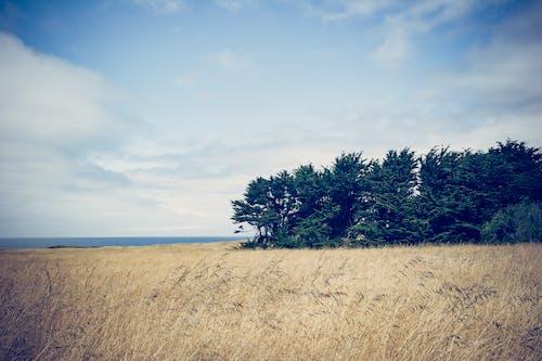 Gratis stockfoto met akkerland, blikveld, bomen, dageraad
