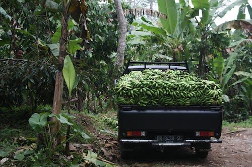Základová fotografie zdarma na téma banán