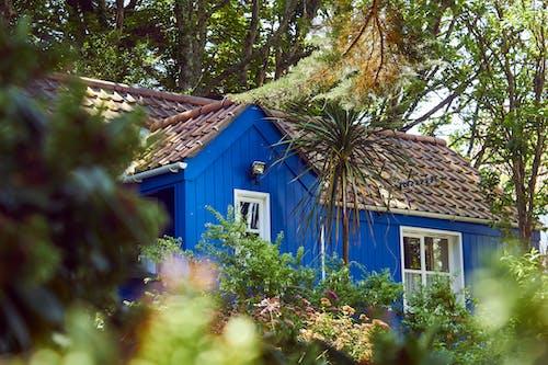 Photos gratuites de arbres, architecture, brouiller, bungalow