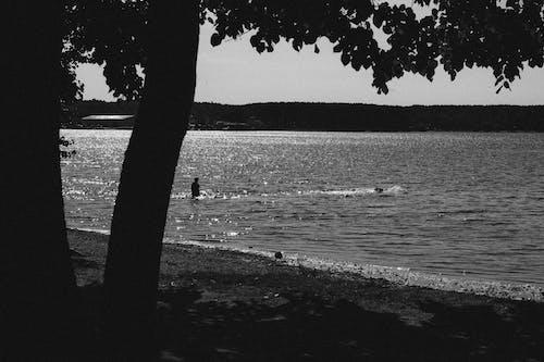 夏天, 天性, 海 的 免費圖庫相片
