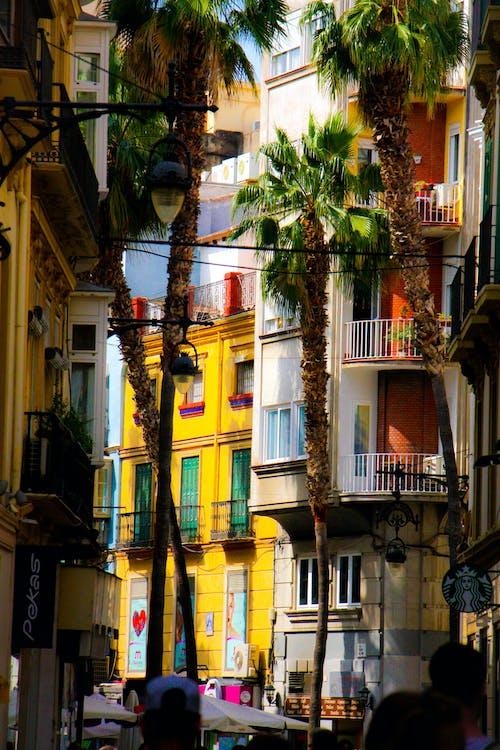 Základová fotografie zdarma na téma barvy, malaga, městská chůze, palmy