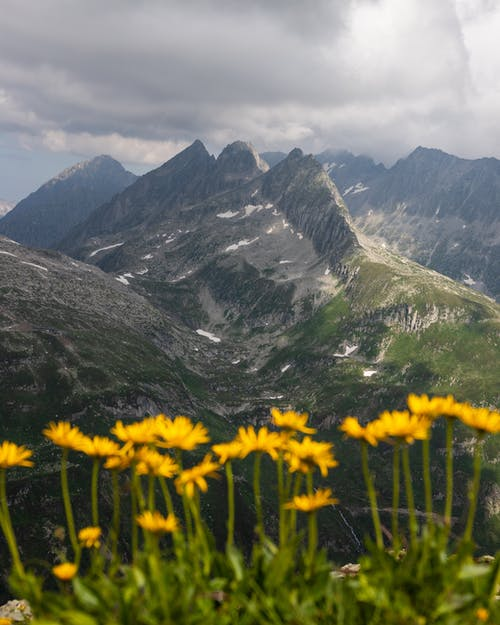 Free stock photo of alps, clouds, dark clouds, flowers