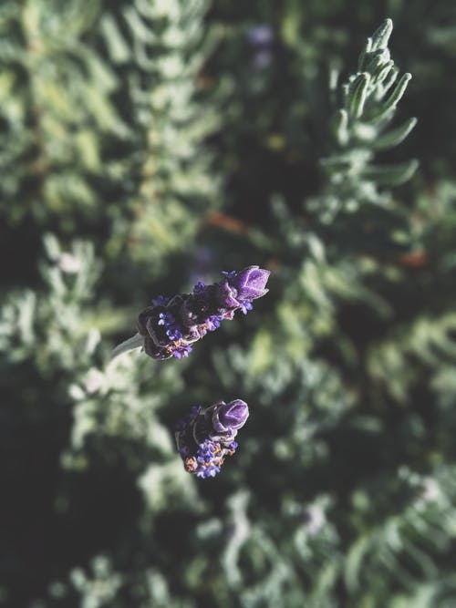 夏季氛圍, 多葉, 天性, 手機桌面 的 免費圖庫相片