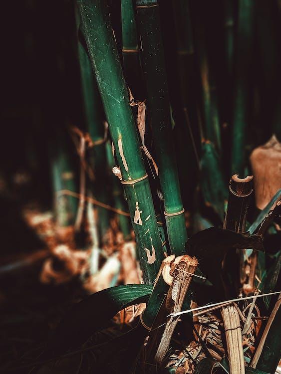 árbol, Arte, bambú