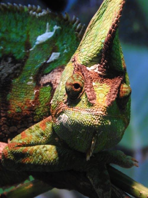 偽裝, 動物, 動物攝影, 天性 的 免费素材照片