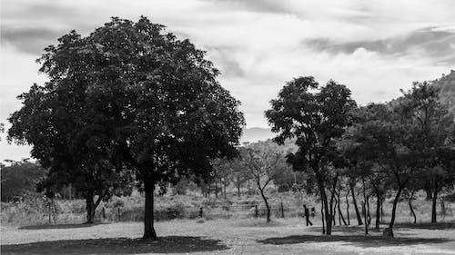Бесплатное стоковое фото с treed, горы, дневной свет, красота в природе