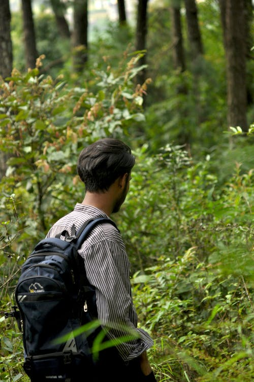 Безкоштовне стокове фото на тему «beauti, дерева, зелений, пейзажі»