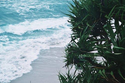 インドネシア, シースケープ, ビーチ, 夏の無料の写真素材
