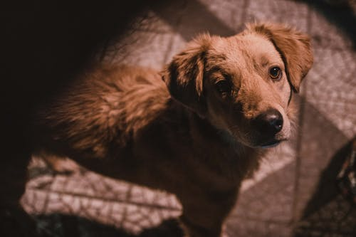 Free stock photo of dog, looking