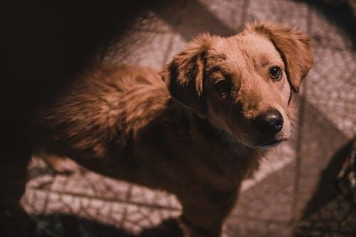Foto stok gratis anjing, mencari