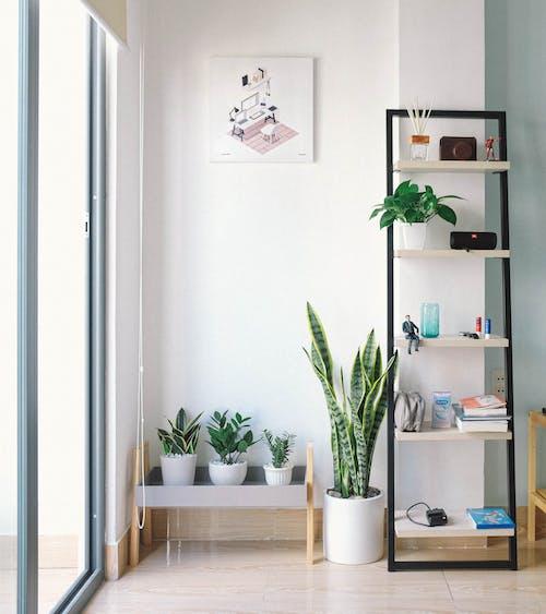 Δωρεάν στοκ φωτογραφιών με άνετα, απλότητα, διακοσμήσεις, διαμέρισμα