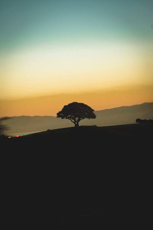 Foto stok gratis alam, bayangan hitam, damai, di luar