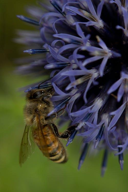 Free stock photo of bee, bees, honey bee