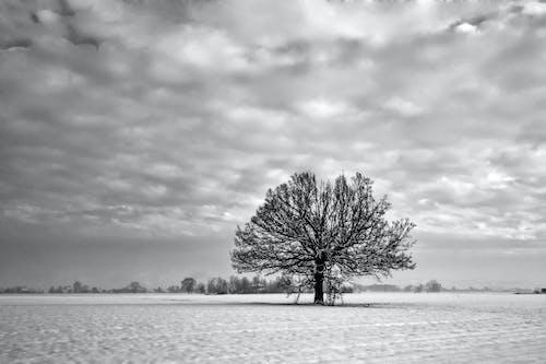 Fotos de stock gratuitas de amanecer, árbol, Arte, blanco y negro