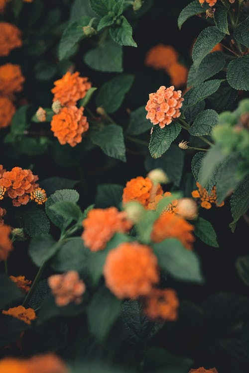 Orange Flowers With Green Leaves Macro Photography