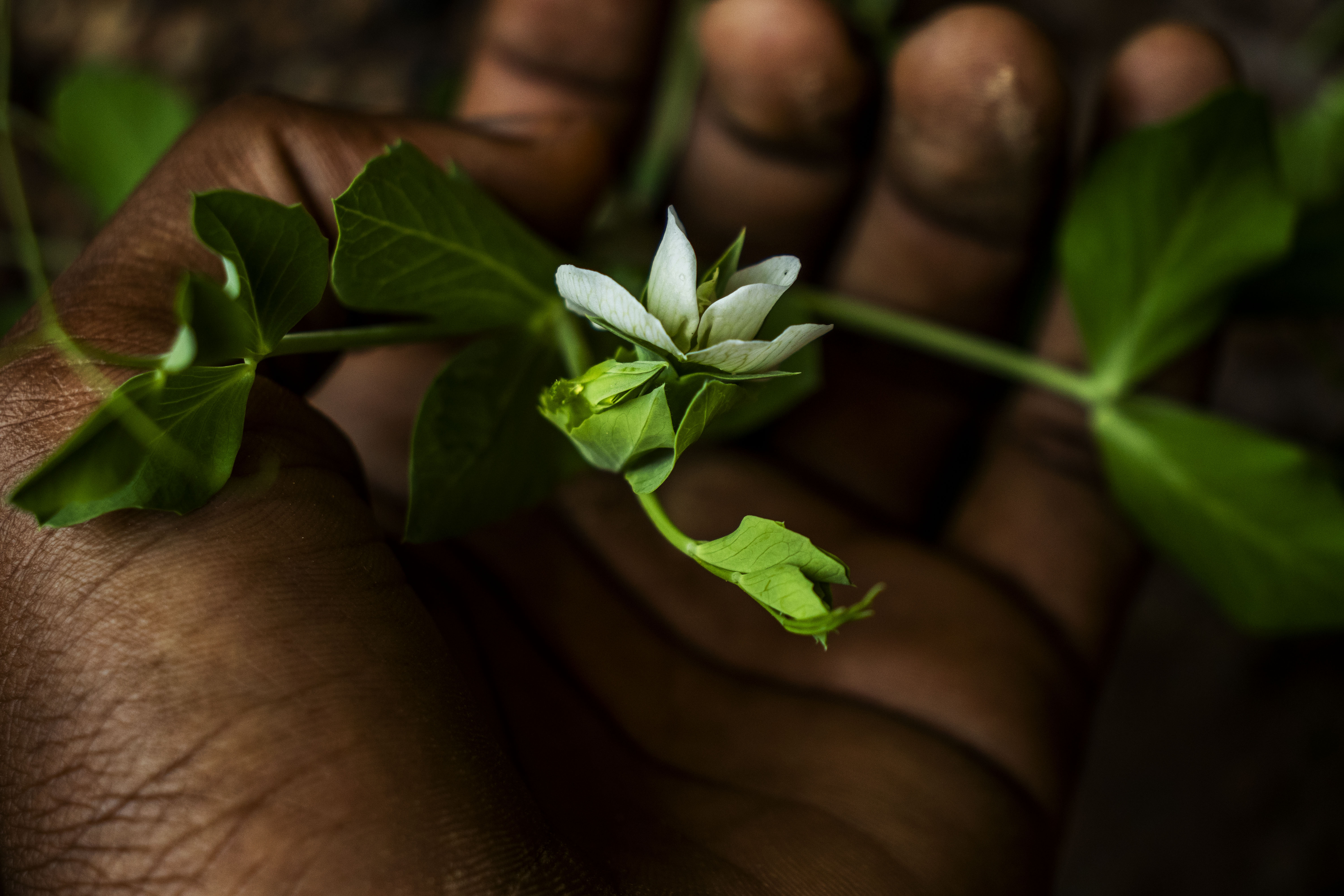 White-petaled Flower on Person's Palm