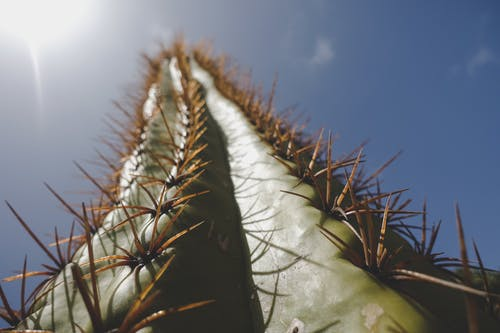Low Angle Photography of Cactus Plant