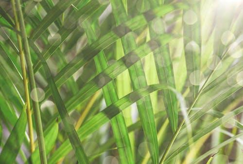 나무, 나뭇잎, 녹색, 바탕화면의 무료 스톡 사진
