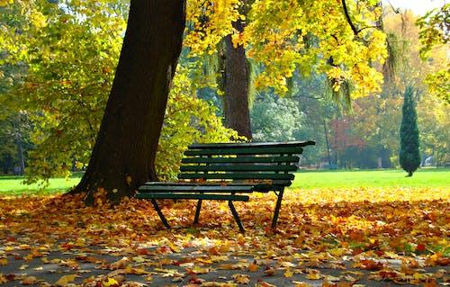 Photos gratuites de arbres, banc, banc de parc, banc en bois