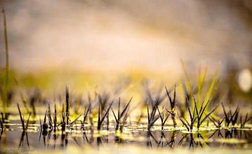 Foto stok gratis perairan terbuka, rumput, rumput di atas air