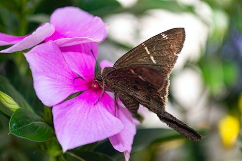 Imagine de stoc gratuită din animal, aproape, bokeh, borboleta