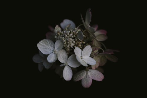 增長, 微妙, 植物群, 漂亮 的 免費圖庫相片