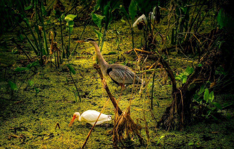 佛羅里達大沼澤地
