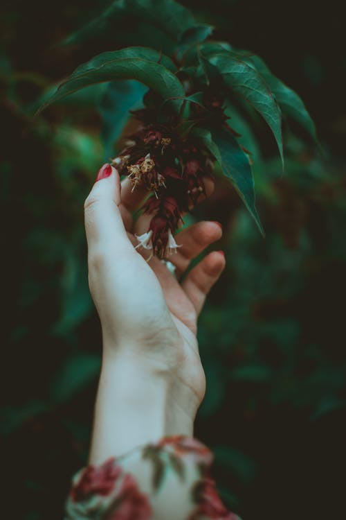 Person Touching A Flower Of A Tree