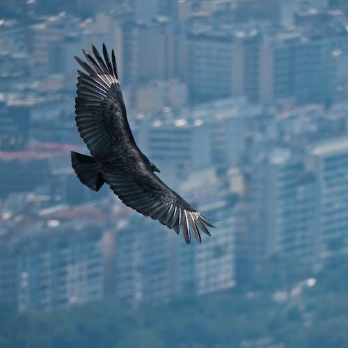 Foto profissional grátis de ave, cidade, subindo