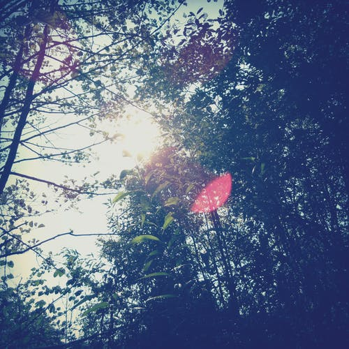 Free stock photo of forrest, summer, sunlight