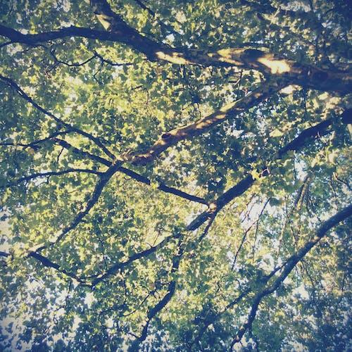 Free stock photo of nature, summer, tree